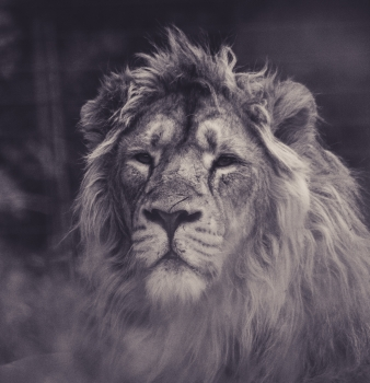 The Servant and the Lion